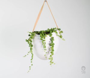 String-of-Pearls-Wall-Hung